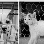 Поможем бездомным животным