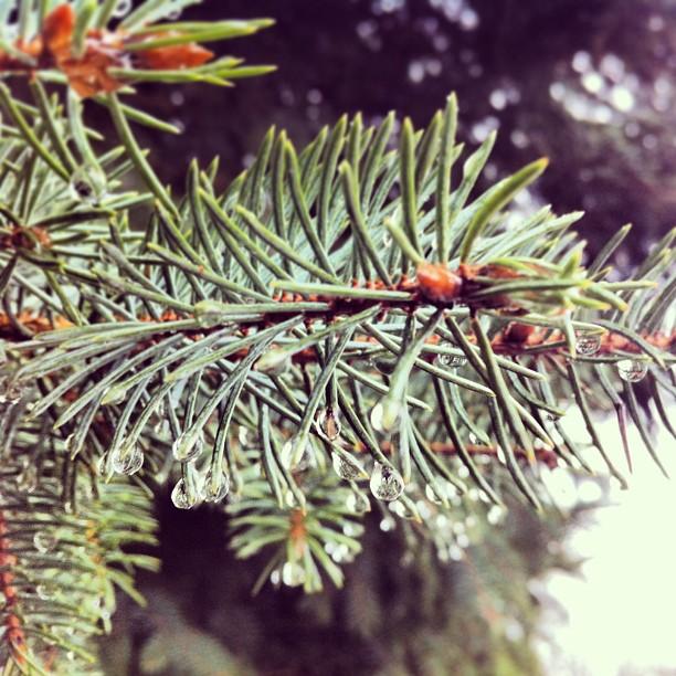 instagram_11-17.02_kometa_01