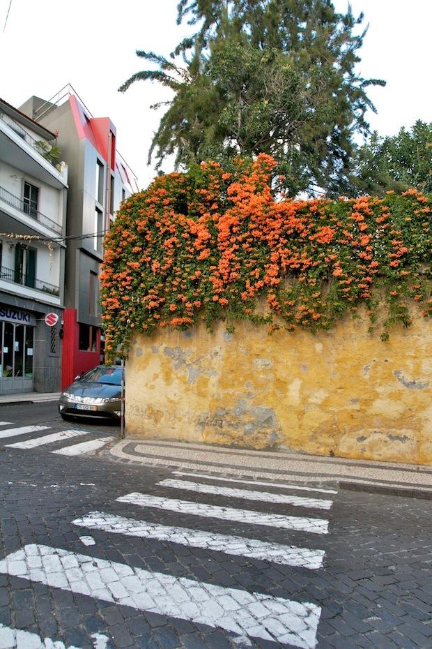 madeira_funcal-flowers