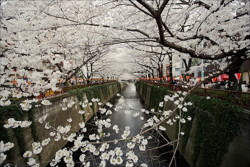 Meguro River — in Tokyo, Japan.