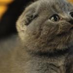 Австралийка открыла вакансию человека-кота