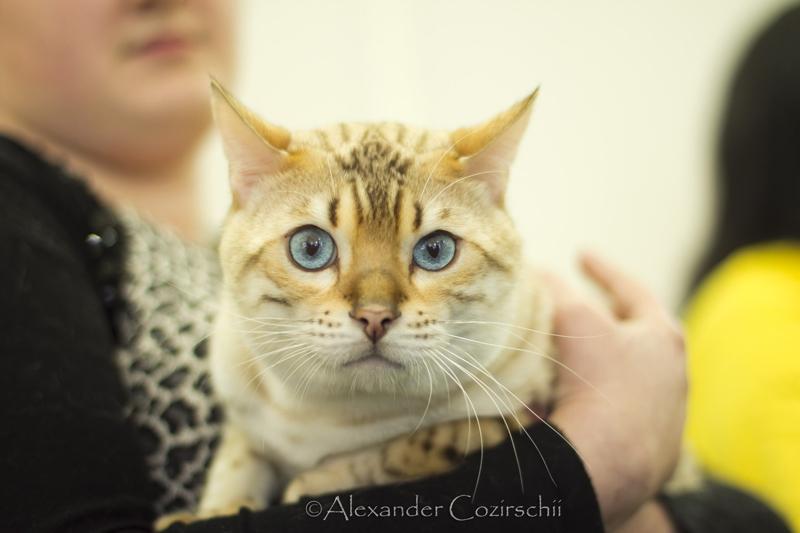 catshow-003