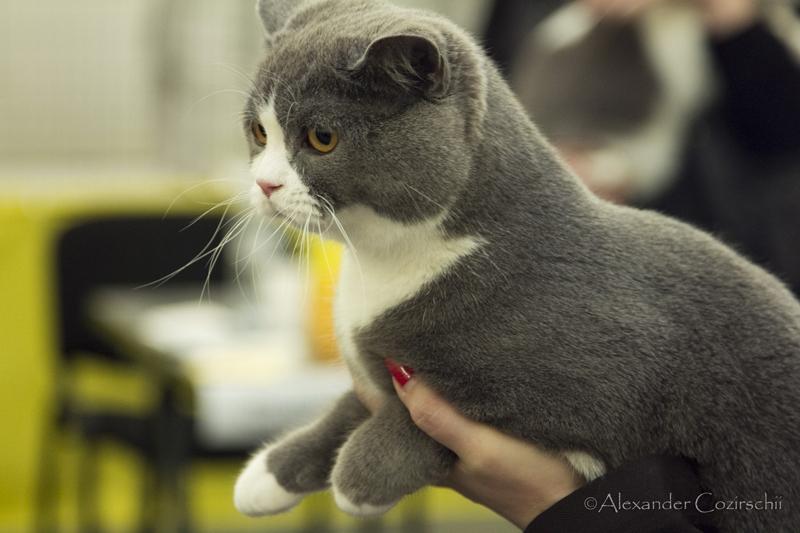 catshow-009