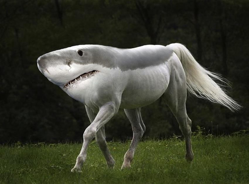 photoshopped-animals-gyyp-10
