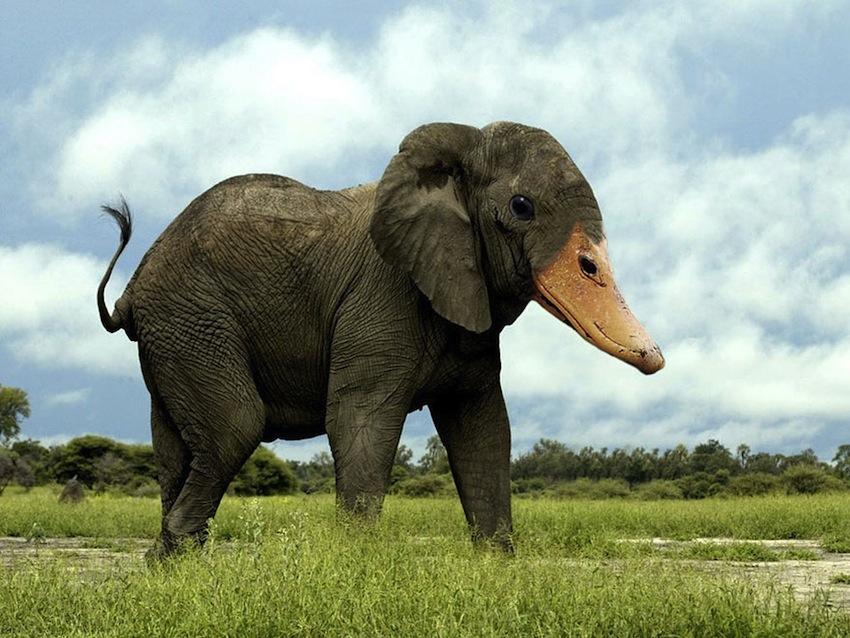 photoshopped-animals-gyyp-15