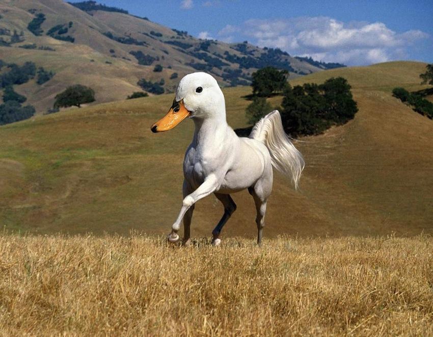 photoshopped-animals-gyyp-2