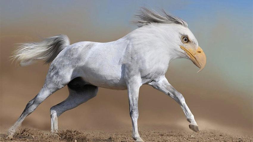 photoshopped-animals-gyyp-8