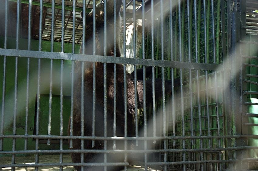 chisinau-zoo-bear