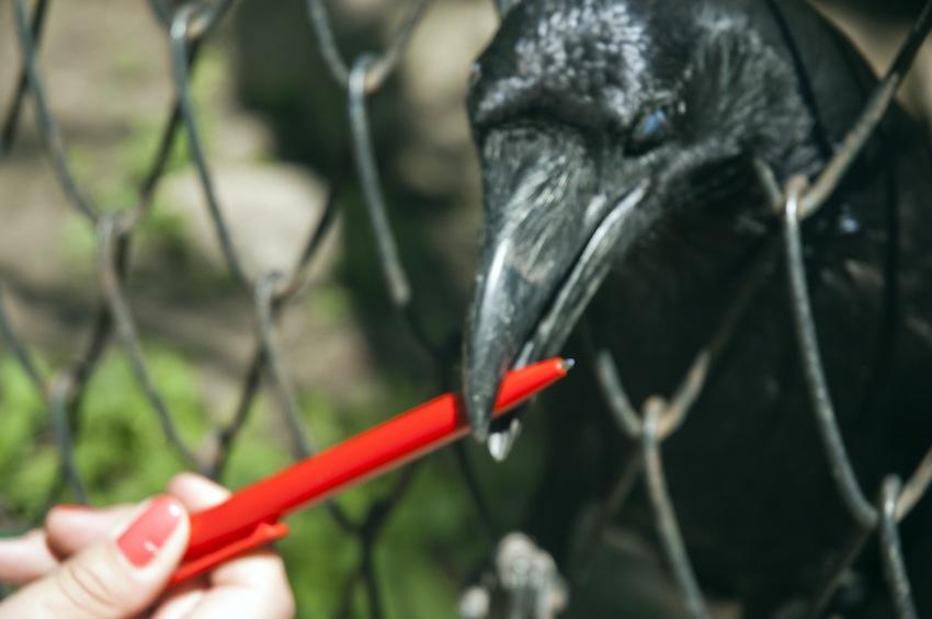 chisinau-zoo-birds-007