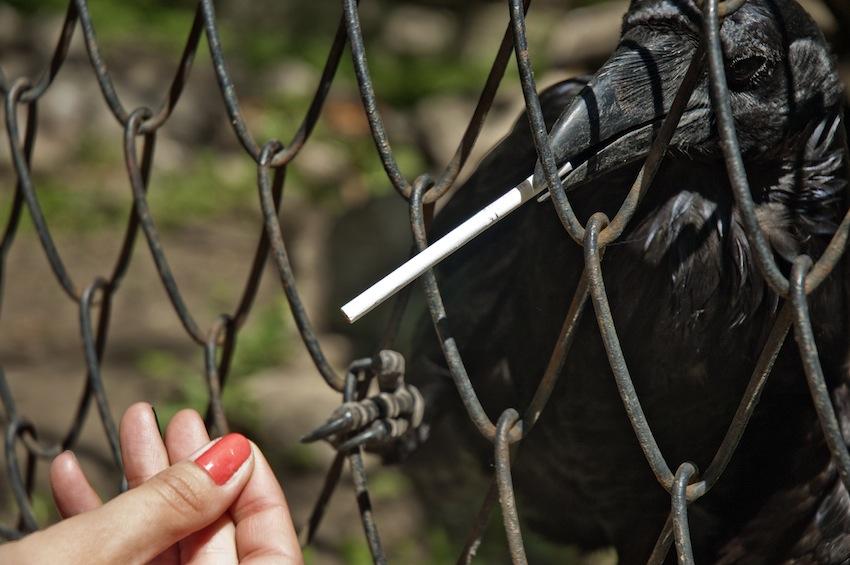 chisinau-zoo-birds-009