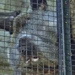 Кишинёвский Зоопарк: Жорик —лиса обыкновенная, лама Филипп & Co