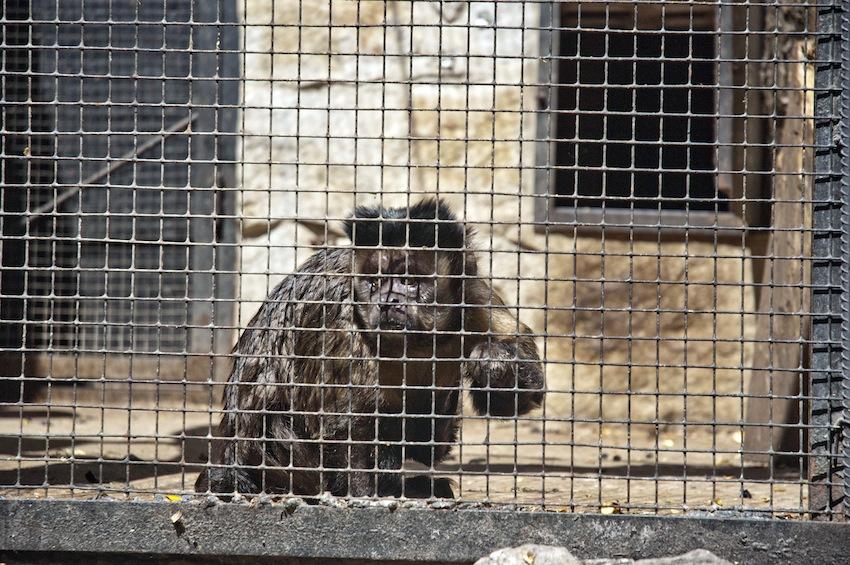 chisinau-zoo-primats2