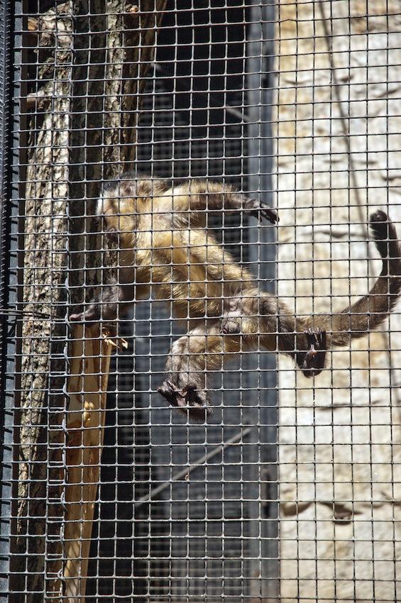 chisinau-zoo-primats3