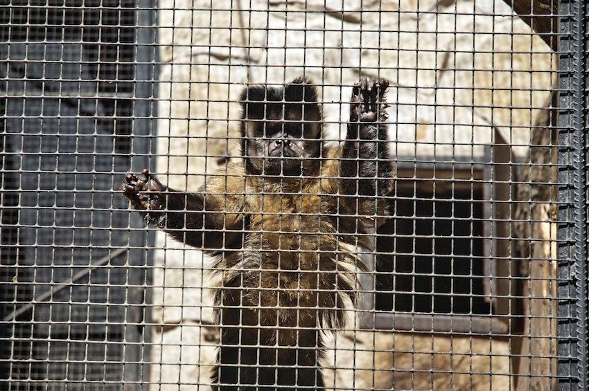 chisinau-zoo-primats4