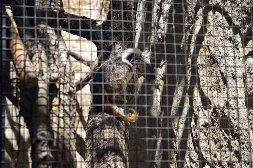 chisinau-zoo-primats5