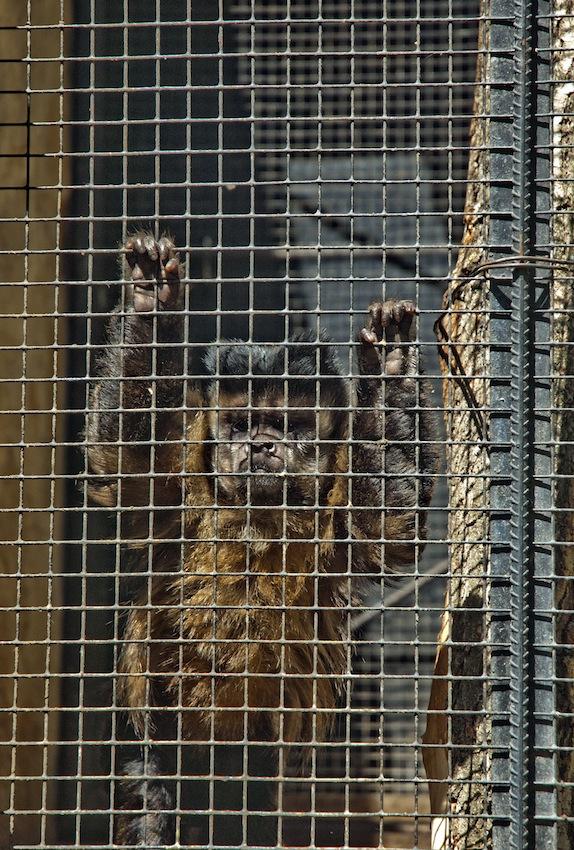 chisinau-zoo-primats7