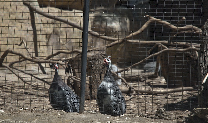 zoo-chisinau-2013-birds-01
