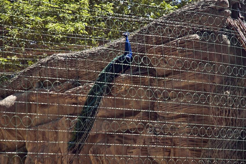 zoo-chisinau-2013-birds-02