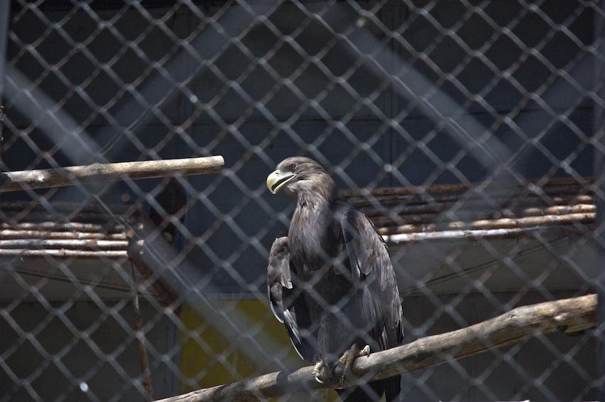 zoo-chisinau-2013-birds-03