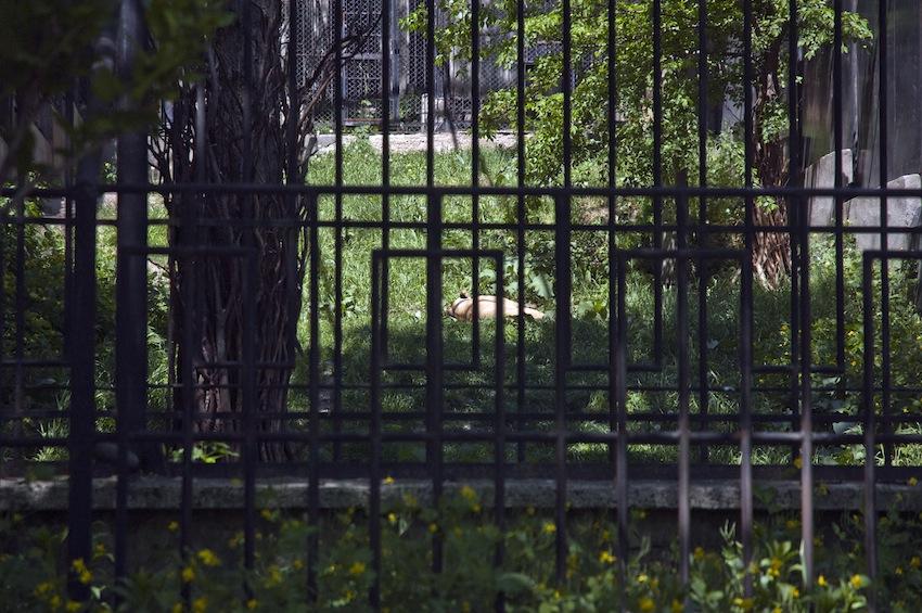 zoo-chisinau-2013-lion