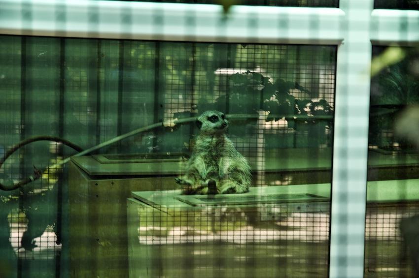 zoo-chisinau-2013-suslik-04