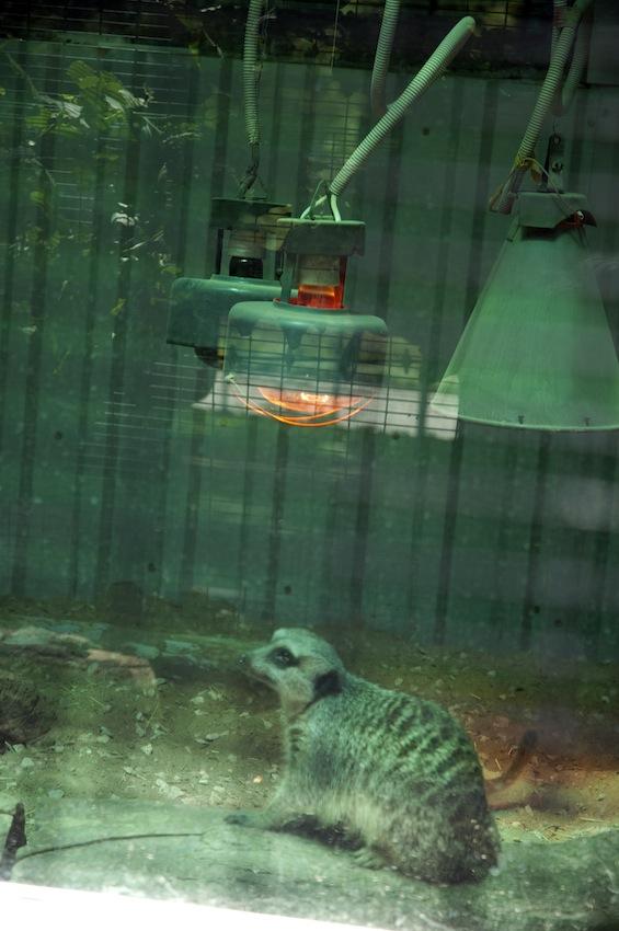 zoo-chisinau-2013-suslik-05