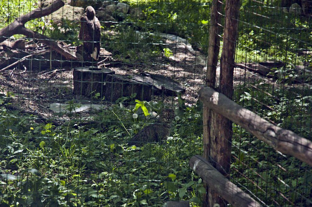 zoo-chisinau-kot
