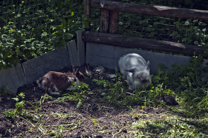 zoopark-chisinau-rabbit-02