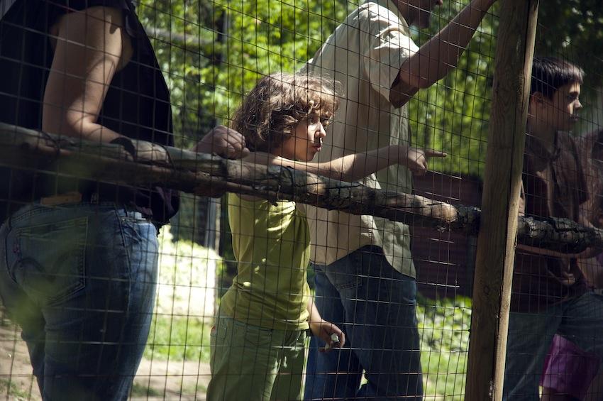 zoopark-chisinau-rabbit-03