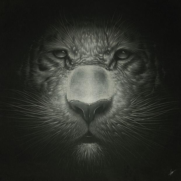 Tiger_0113