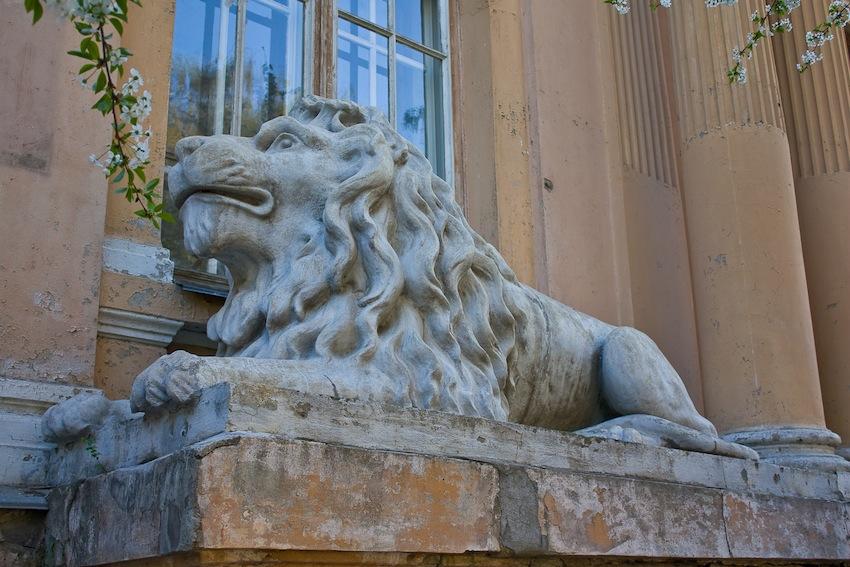 львы на заднем крыльце органного зала 2
