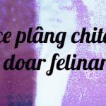 10 румыноязычных песен, которым вы подпевали хоть раз в жизни!