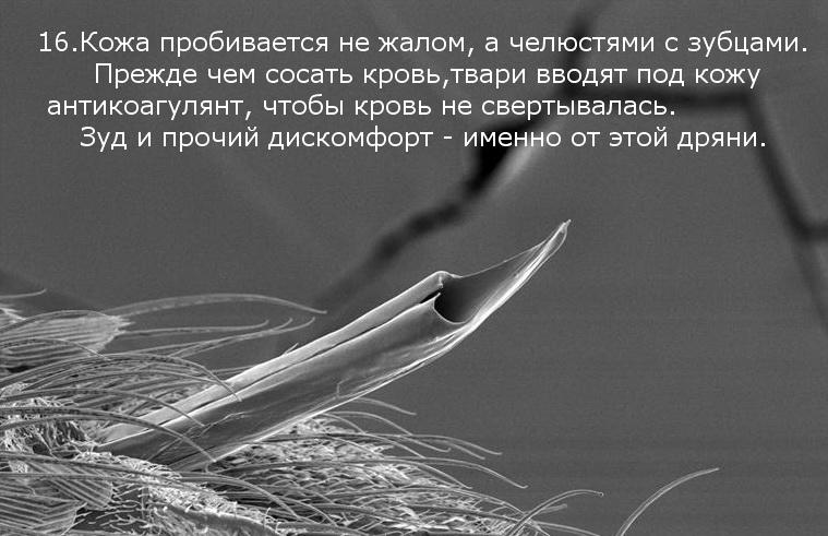 komar_03