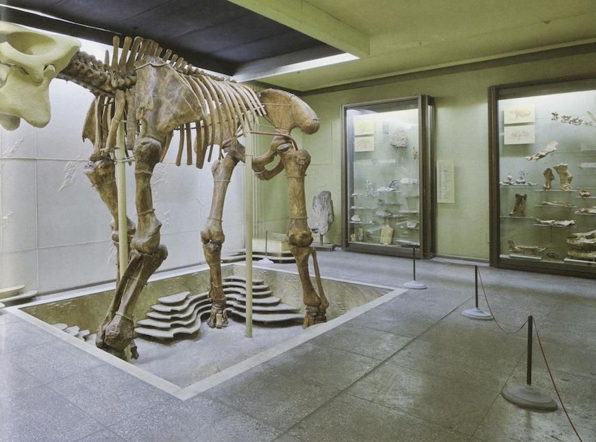 Ursu M. - Muzeul National de Etnografie si Istorie Naturala. Ghid - 2009-3