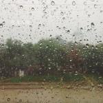 В Кишиневе женщина скончалась из-за упавшего дерева
