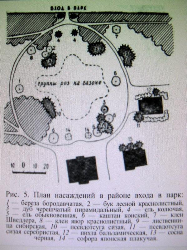 """План части Верхнего парка (из книги Леонтьева """"Парки Молдавии"""")"""
