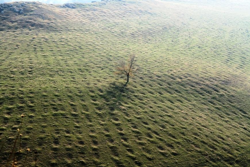 Дерево на склоне ущелья Брынзень
