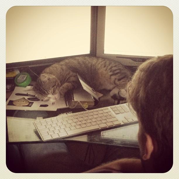 cats_010