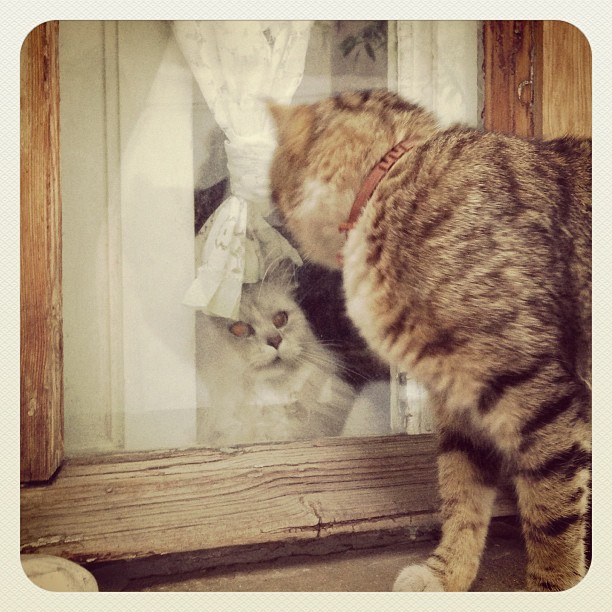 cats_011
