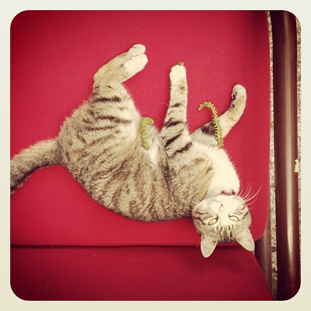 cats_012