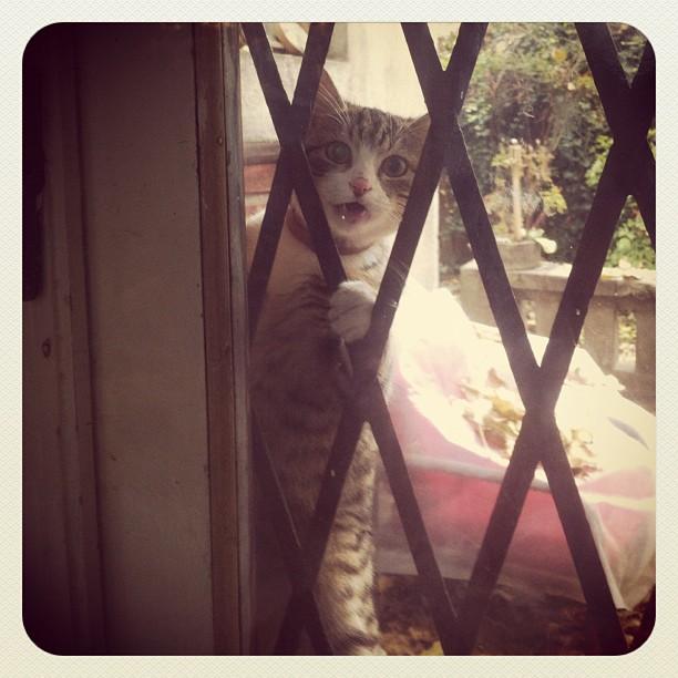cats_013