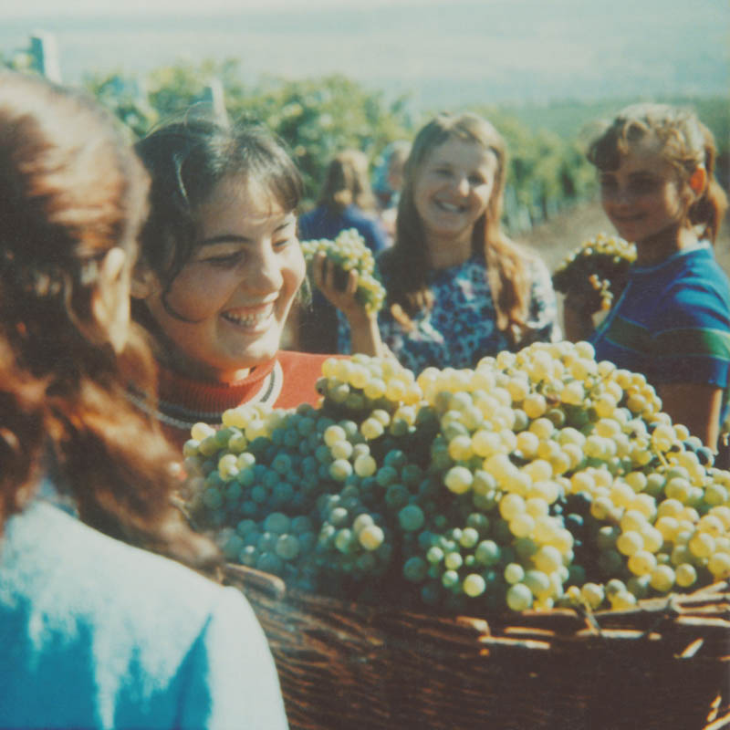 Youth on the grape harvest (1972).
