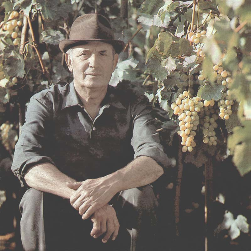 The hereditary wine-grower Dumitru Samoila, area Kozhushna (80's)