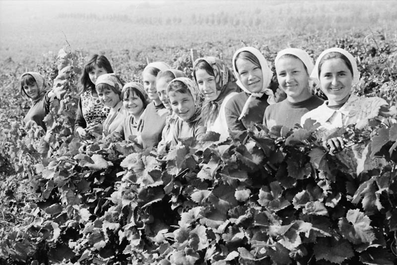 At harvest (1972)