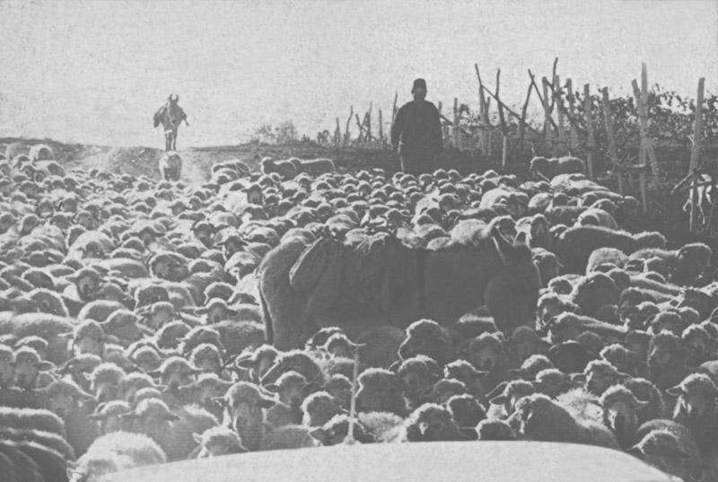 Юг Молдовы, 1972 г.