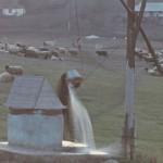 Фотограф Ион Кибзий: Сельская жизнь Молдовы в 60е-80-е