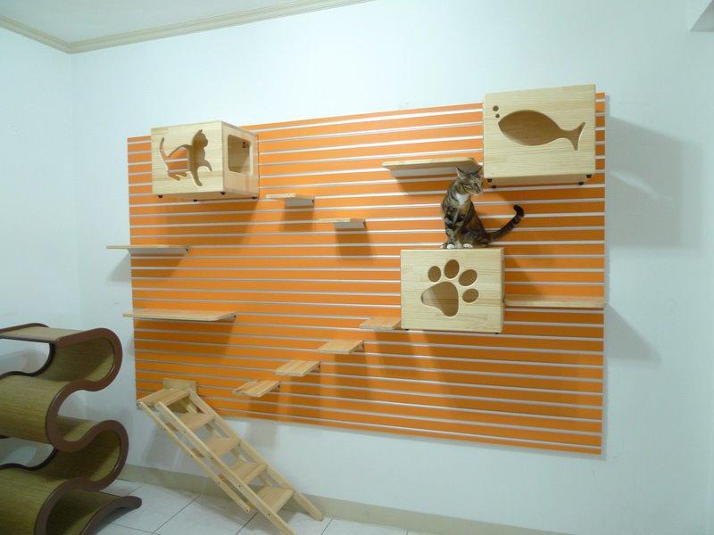 Cat-Climbing-Wall-10