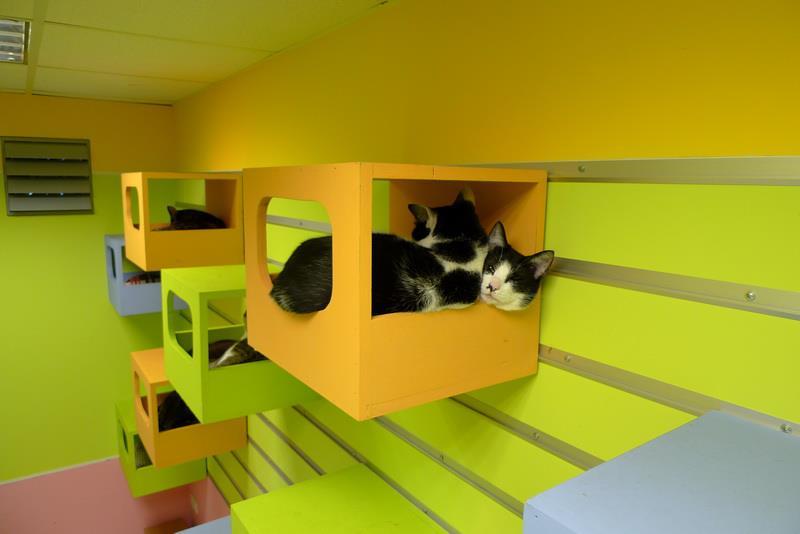 Cat-Climbing-Wall-4