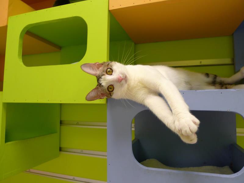 Cat-Climbing-Wall-5