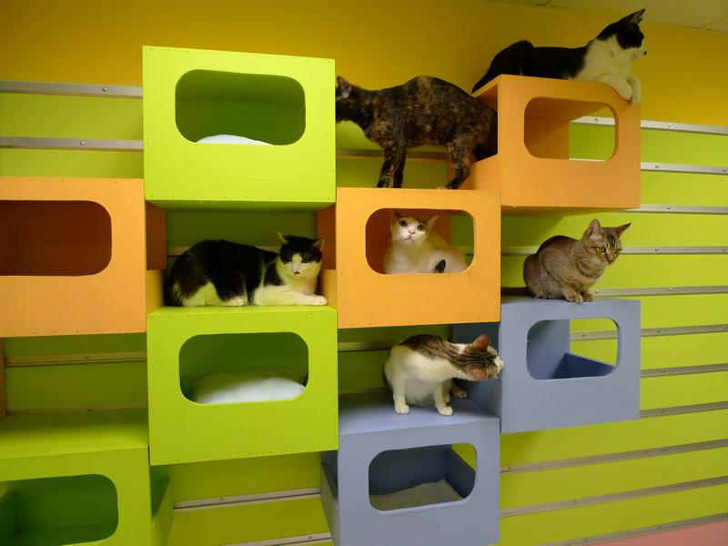 Как сделать игровой домик для кошки своими руками